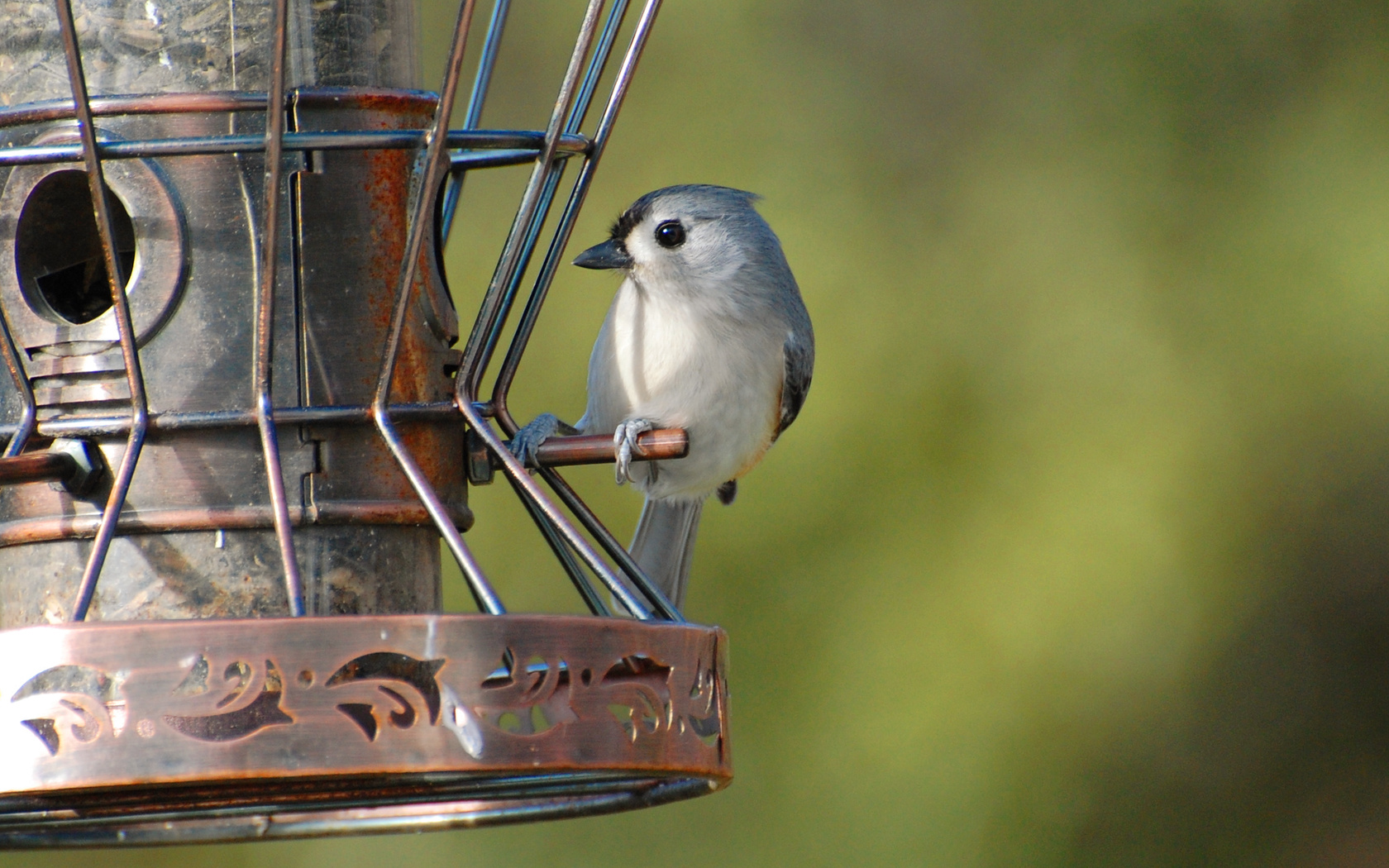 Suzanne Britton Nature Photography: Tufted Titmouse 2